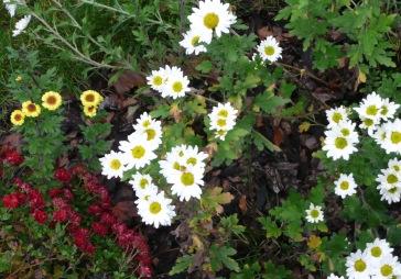 autumninmygarden1