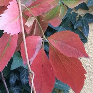 autumninmygarden10
