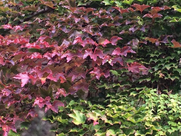 autumninmygarden9