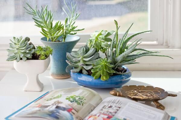 succulentplant