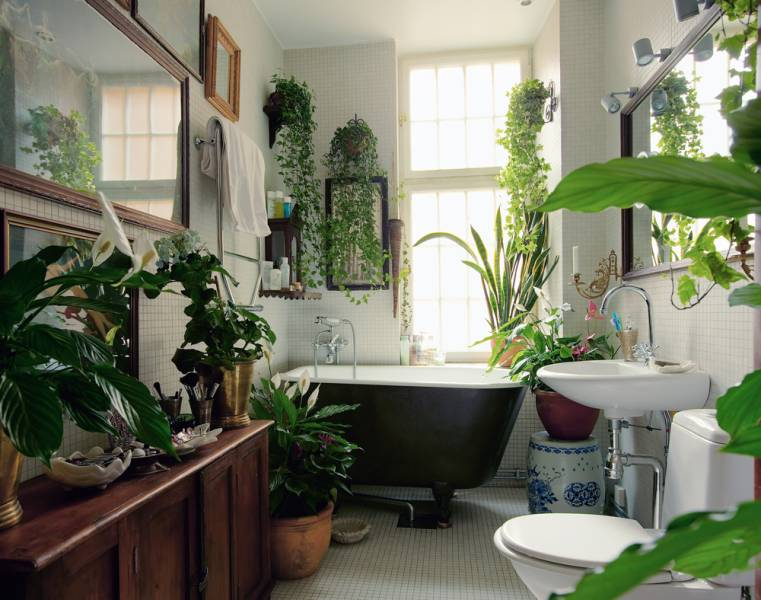 bathroom-plants-lush