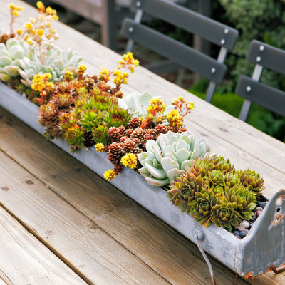 water-wise-design-guide-plant-picks-container-combos-tiny-treasures-1013.jpg
