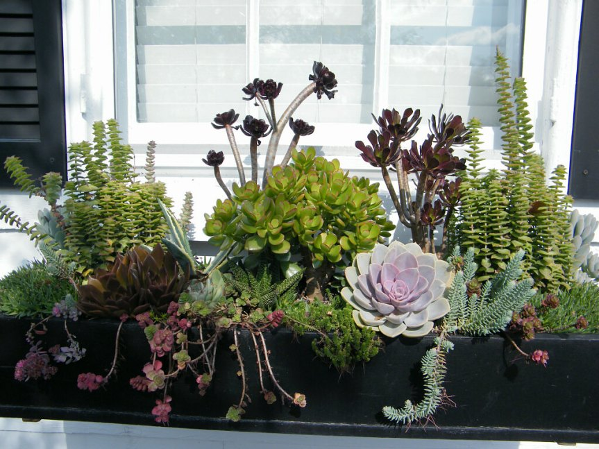 window-box-with-succulents