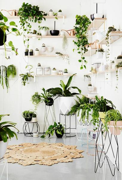 houseplants-display-ideas-5_grande