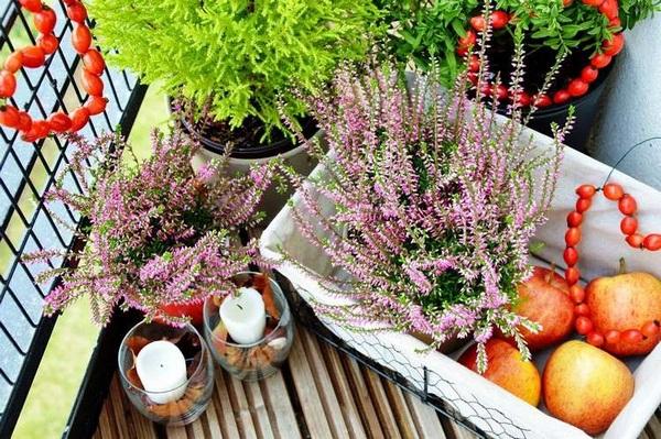 Autumn-decoration-pagan-hips-Apple-balcony